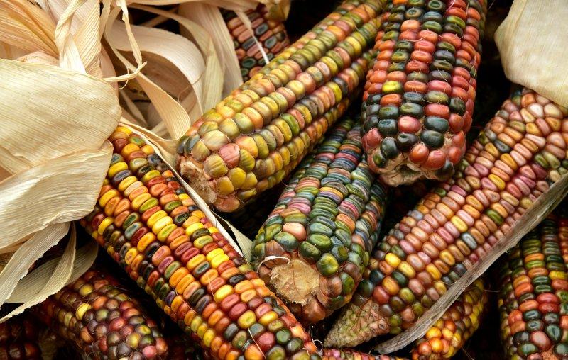 Smaki I Kuchnia Ameryki Południowej Charakterystyka